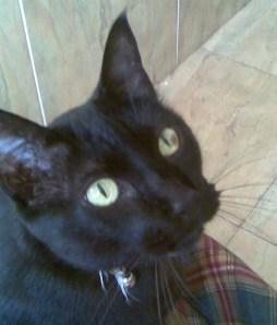cuidado con los collares de los gatos